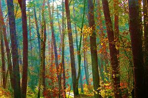 Kleurrijk bos. van