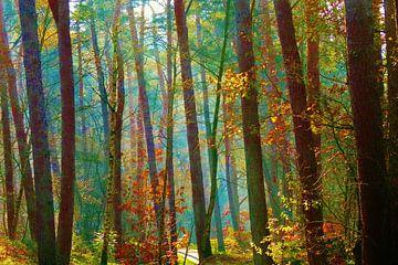Kleurrijk bos. van Lex Boon