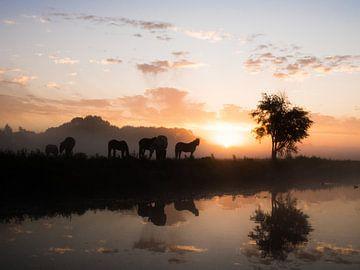 Groep paarden in  ochtend van Dirk van der Plas