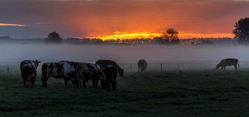 koeien in de morgen van ton vogels