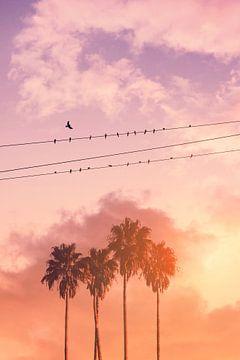Vogels op stroomkabel van Jonas Loose