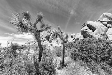 Monochrome Idylle im Joshua Tree National Park von Melanie Viola