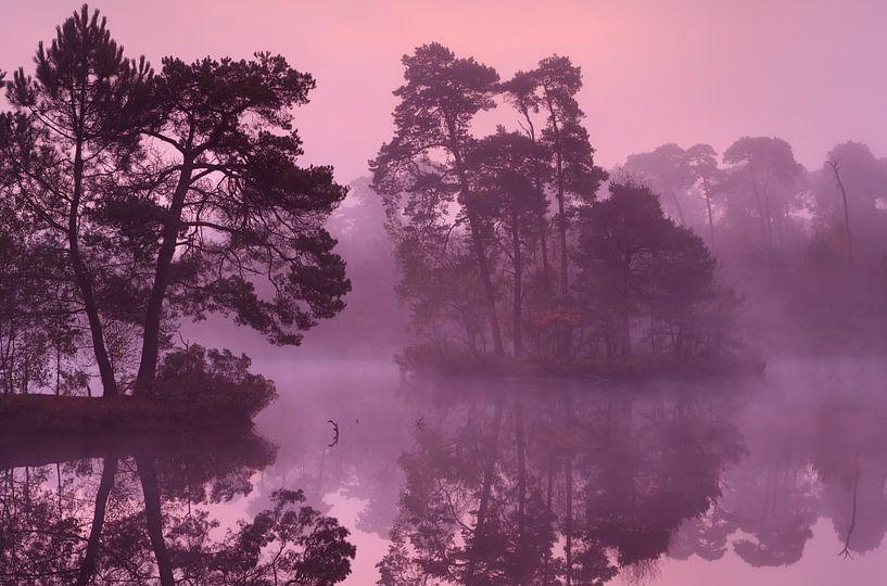 Tree islands van Olha Rohulya