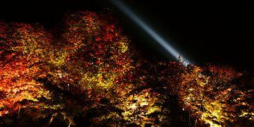 lichtinstallatie in kyoto van Stefan Havadi-Nagy