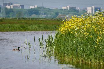 Wasserland von Peet Romijn