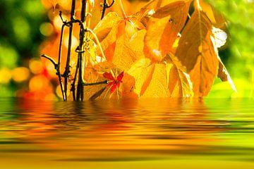 Herfstbladeren worden gereflecteerd in het meer van Frank Grässel