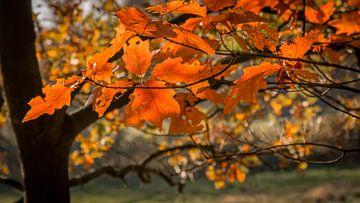 Kleurige herfstbladeren aan een tak van Michel Seelen