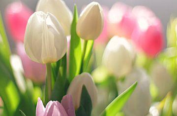 Frühlingstulpen von Marianna Pobedimova