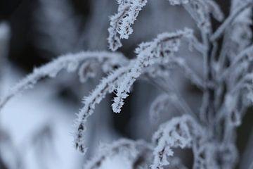 Winter wonderland sur Simone van der Oost-van Groningen