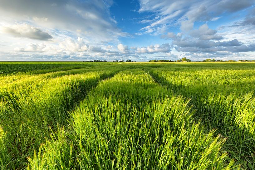 Graanvelden in de zon - Groningen, Nederland van Bas Meelker