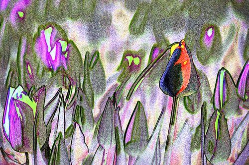 Abstract tulpenveld