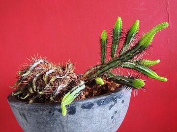 Kamerplant: SciFi Cactus 2-6 van MoArt (Maurice Heuts)