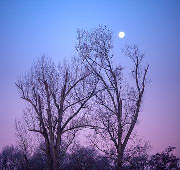 Ochtend Maan van Vladimir Fotografie