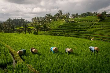 Arbeiter im Reisfeld Bali von Ellis Peeters