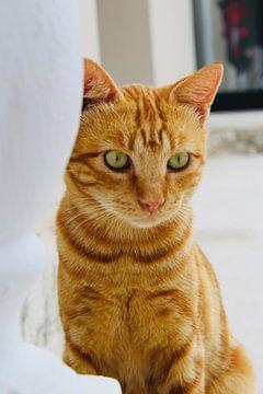 Rode kat/poes van Sabrina van Jeveren