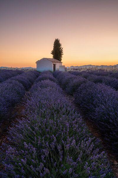 Veld met lavendel in Frankrijk met schuurtje voor de zonsopgang. van Voss Fine Art Fotografie