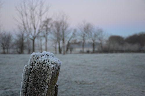 ijs in Nederland van