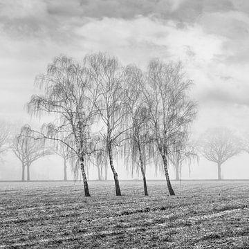 Winterlandschaft mit schönen Bäumen in nebligen field_1 von Tony Vingerhoets