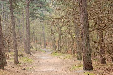 Bos Bergen van Margreet Frowijn