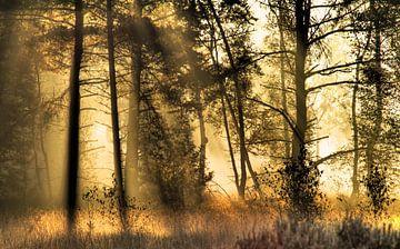Zonlicht tussen de bomen en de nevels von J.A. van den Ende