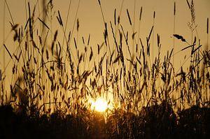 Zonsondergang in grasland