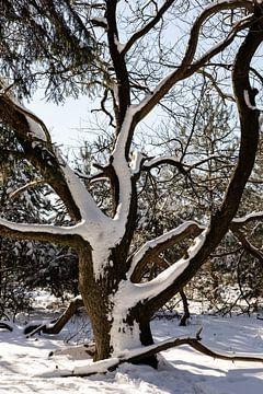 Besneeuwde boom van Tamara Geluk
