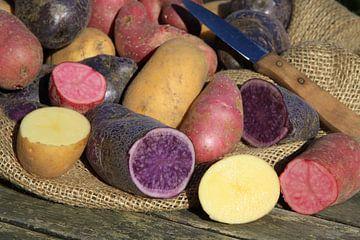 Verschiedene alte Kartoffelsorten von Karina Baumgart