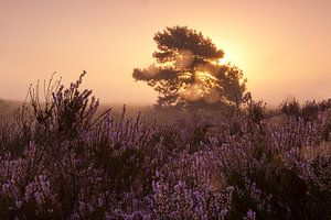 Morning glow landscape