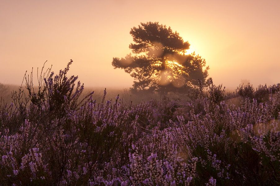 Morning glow landscape van Andrea Gulickx