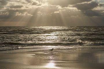 Meeuw aan de Noordzee tijdens gouden uur van Cor de Hamer