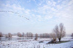 Winters plaatje Tiel van