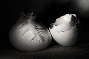 Witte eierschalen met veer en ei van