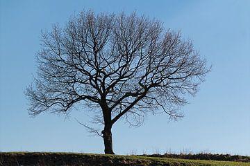 De eenzame boom van DroomGans