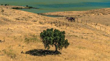 Spaans landschap von Harrie Muis