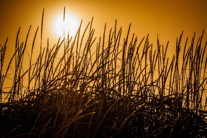 Silhouet van grashalmen van Edwin van Wijk