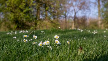 Vroege lente in De Gavers van Ronald De Neve