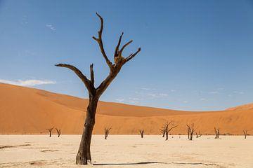 Deadvlei in Namibië van Simone Janssen