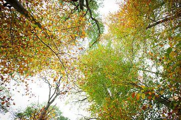 Fel gekleurde boomtoppen in de herfst van Andy Van Tilborg