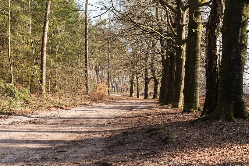 Wandelpad in bos Lage Vuursche van Jaap Mulder