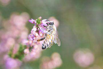 Fleißige Biene von Marieke de Jong