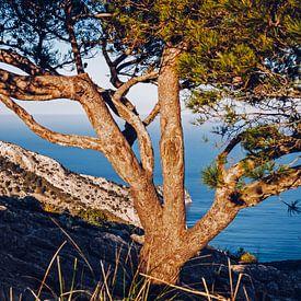 Mallorca - La Victòria von Alexander Voss
