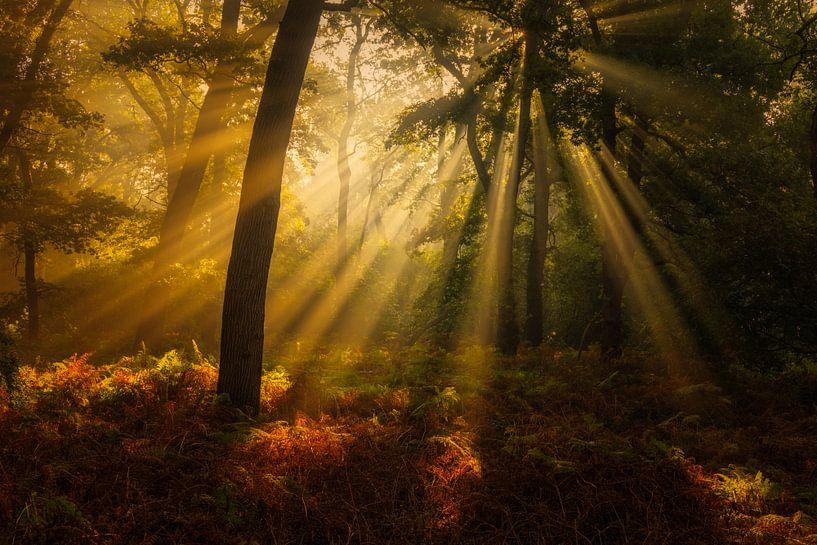 Herfstbos met prachtig licht in het Norgerholt op een mooie herfst ochtend, Norg, Drenthe van Bas Meelker