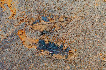 Rusty Leaves IV van LYSVIK PHOTOS