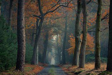Wald in Herbstfarben verändert von Jacco van Son