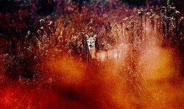 Ree in de Beningerslikken van Sven Zoeteman