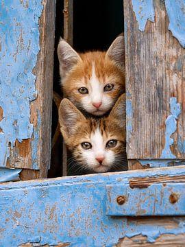 Schattige kittens in blauw venster van Katho Menden