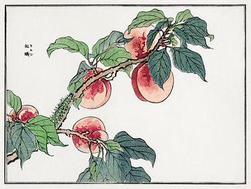 Raupe auf einem Pfirsichbaum Illustration von Morimoto Toko. von Studio POPPY