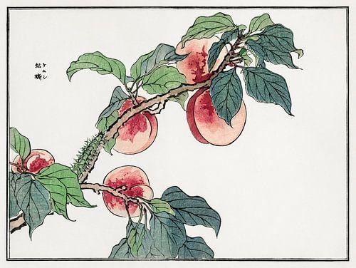 Rups op een perzikboom illustratie door Morimoto Toko.