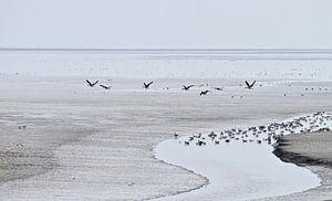 Waddenzicht bij de Zwarte Haan, Friesland van Artelier Gerdah