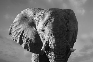 Bedrohlicher Elefant von Adri Klaassen